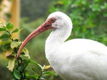 Closeup of Large White Bird Royalty Free Stock Photos