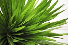 Closeup of a leaf Stock Photos