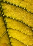 Closeup leaf Stock Photography