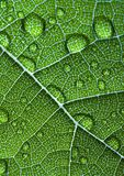 Closeup leaf Stock Photo