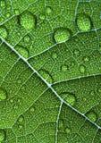 Closeup leaf Stock Photo