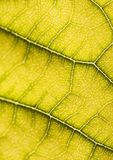 Closeup leaf Stock Image