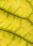 Closeup leaf Stock Image
