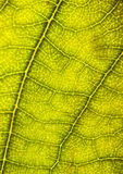 Closeup leaf Stock Photos