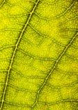 Closeup leaf Stock Photos