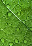 Closeup leaf Stock Images