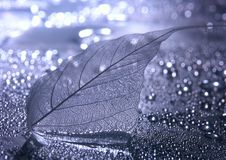 Closeup leaf Stock Images