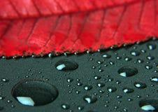 Closeup leaf Stock Photography