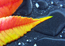 Closeup leaf Royalty Free Stock Photography
