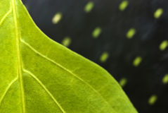 Closeup of a leaf Royalty Free Stock Photo