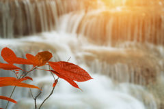 Closeup leaf on autumn season at huay mae khamin waterfall in t. Close up leaf on autumn season at huay mae khamin waterfall in thailand Royalty Free Stock Images
