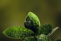 Closeup of a leaf covered in droplets with bokeh background Stock Photos