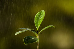 Closeup of a leaf covered in droplets with bokeh background Royalty Free Stock Image