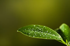 Closeup of a leaf covered in droplets with bokeh background Royalty Free Stock Photo