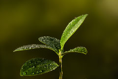 Closeup of a leaf covered in droplets with bokeh background Stock Photo
