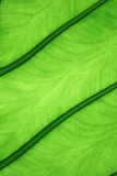 Closeup leaf detail Stock Photography