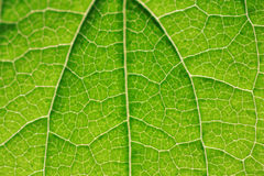 Closeup of a leaf Stock Photos