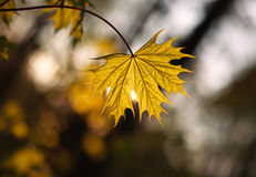 Closeup leaf growing in forest in light of setting sun Stock Photo