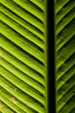 Closeup of a leaf lit by sunlight Royalty Free Stock Photography