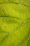 Closeup leaf,nature background Stock Images