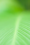 Closeup of leaf in shallow depth of field. Royalty Free Stock Images