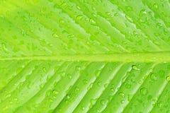 Closeup of  leaf texture, Royalty Free Stock Photos