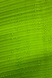 Closeup of leaf with water drops Royalty Free Stock Photos