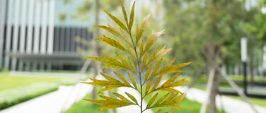 Closeup leave on blurred building background stock photos