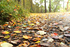 Closeup of leaves on a fall dirt road Royalty Free Stock Photos