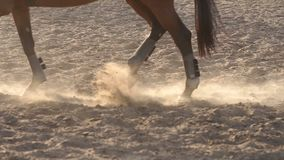 Closeup of legs of horse in training at horse farm. Close-up of a professional horse hooves while training. Close-up of legs of a horse in training at a horse stock video