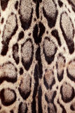 Closeup leopard hair for background Royalty Free Stock Photo