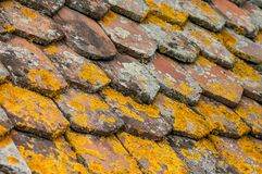 Lichen on terra cotta tiles on roof. Closeup of lichen on terra cotta tiles on roof Stock Photography