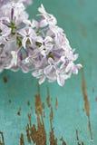 Closeup of Lilac flowers stock photo