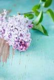 Closeup of Lilac flowers Stock Photos