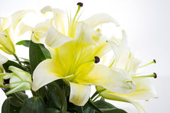 Closeup lily bouquet on whit background Royalty Free Stock Photos