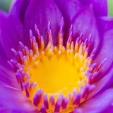 Closeup Lily Stock Photo