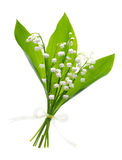 Closeup on lily of the valley flowers on white Stock Photos