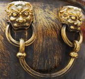 Closeup lions Royalty Free Stock Image