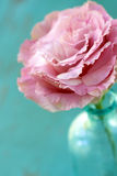 Closeup of Lisianthus Flower. Blooming pink lisianthus flower in blue vase Stock Image