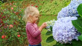 Closeup Little Girl Touches Hydrangea Flower Petals in Park stock video footage