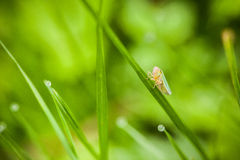 Closeup of little insect Stock Photography