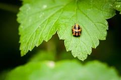 Closeup of little ladybird Stock Photo