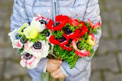 Closeup of little toddler lovely girl hands with red and white ranunculus flowers in spring garden. Close-up of baby. Holding fresh colorful bouquet as gift for royalty free stock photography