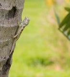 Closeup lizard Stock Photos