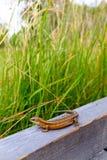 Closeup of a lizard stock photography