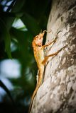 Closeup of a lizards kind of reptiles. Sitting on a  palm. Eatin. G a insect Royalty Free Stock Image