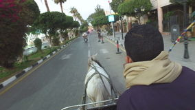 Closeup of local man riding horse cart on urban road in Luxor. LUXOR, EGYPT - FEBRUARY 10, 2016: closeup of local man riding horse cart on urban road in Luxor stock video footage