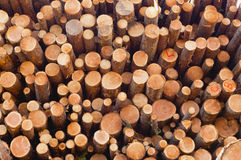 Closeup of log ends in a stack of cut logs Royalty Free Stock Photos