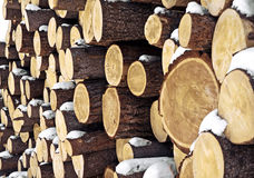 Closeup logs Stock Photography