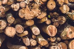 Closeup of logs of trees in nature, pile of wood logs ready for winter in the forest, firewood as a renewable energy source waitin. G to be transported royalty free stock image